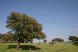 Agriturismo Casteldoria